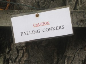 "This was on the tree in front of Abbey Road Studios.. I'm always looking out for ""falling conkers""."